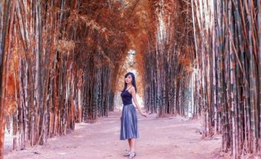 7 Wisata Hutan Bambu Terindah
