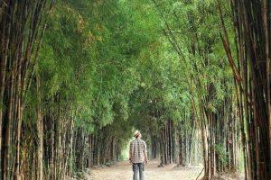 Hutan Bambu Keputih - Surabaya